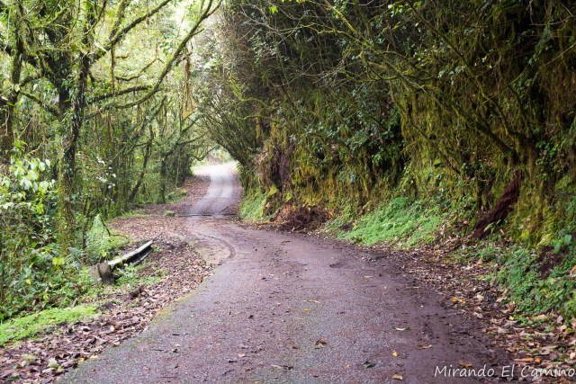 Mossy Forest Camino