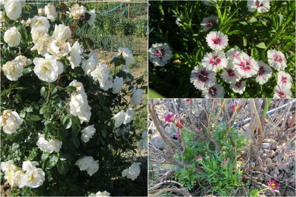El jardín vuelve a la vida