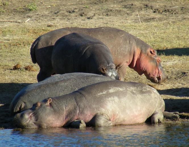 namibie-de-windohek-à-chobe-au-botswana-