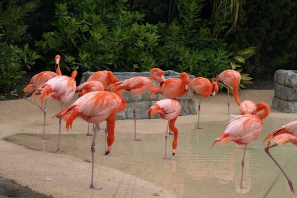 15 jours en famille aux Everglades Floride