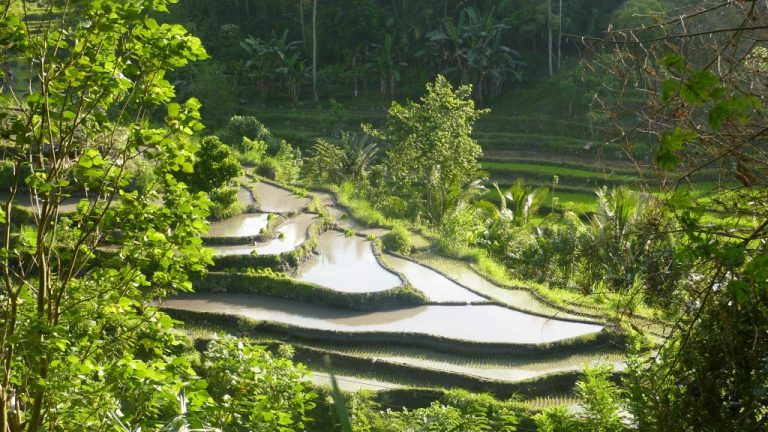 Indonésie un voyage de rêve