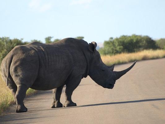 aventures sud africaines