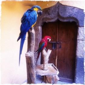 ... oder man unterhält sich mit den beiden Ara-Papageien, die ihre Besucher mit einem fröhlichen Hola begrüßen. (Foto: balkanblogger.com)