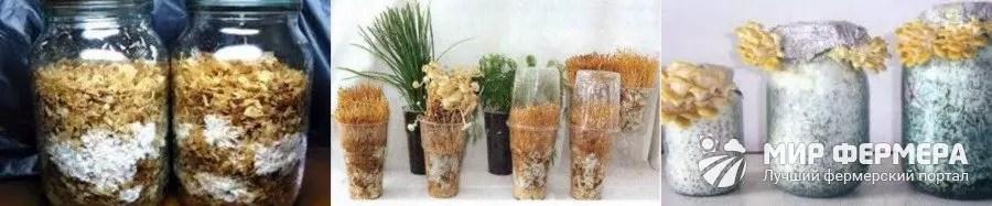 Modi di coltivazione nelle banche