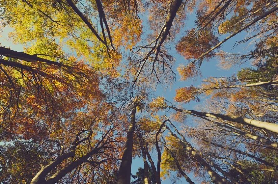 El árbol de la Vida