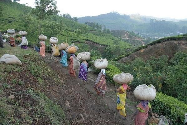 mujeres-indias-trabajando2