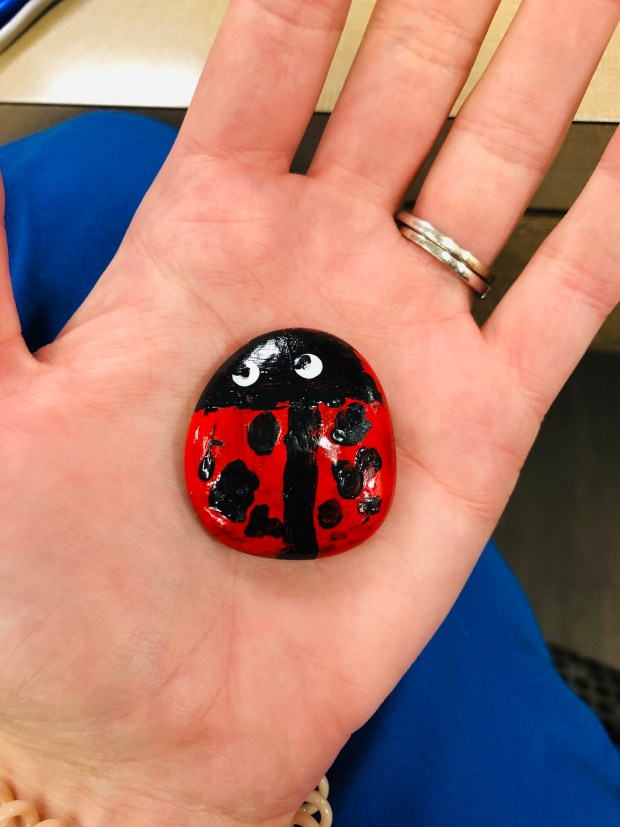 Ladybug painted rock