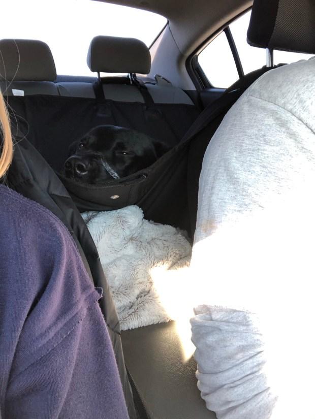 Chance sleeping in car