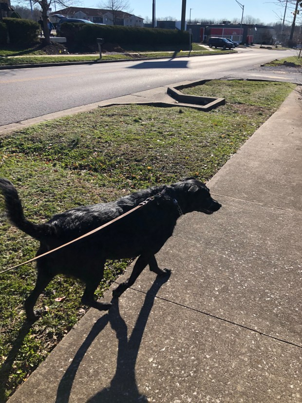 Taking Chance on a walk during road trip to Nashville