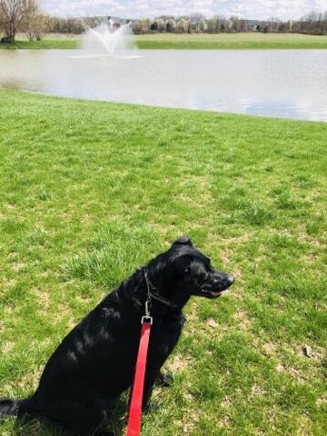 Chance walking around the pond