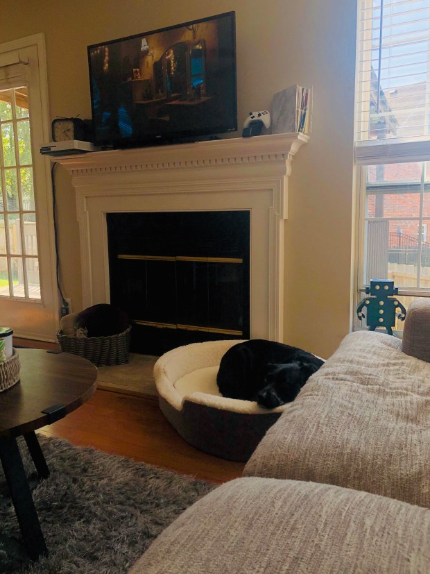 Dog sleeping in bed in living room