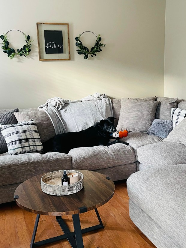 Dog laying on couch in cozy living room