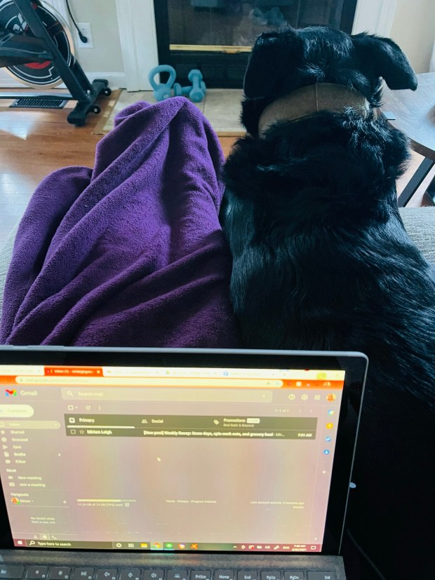 Working from home with dog