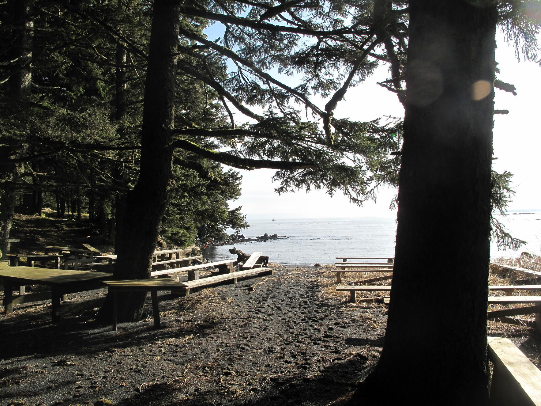 Insula Spruce / Kodiak / Alaska