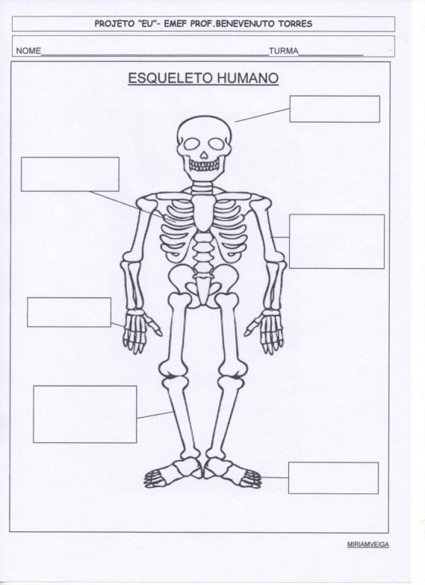 projeto eu - esqueleto
