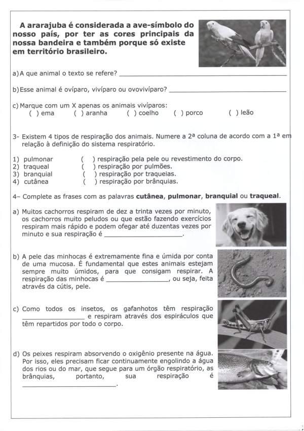 Avaliação de Ciências 4 Ano-Interpretação Reprodução-Folha 2