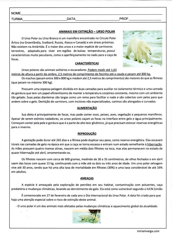 Animais em Extinção-Urso-Polar-Interpretação