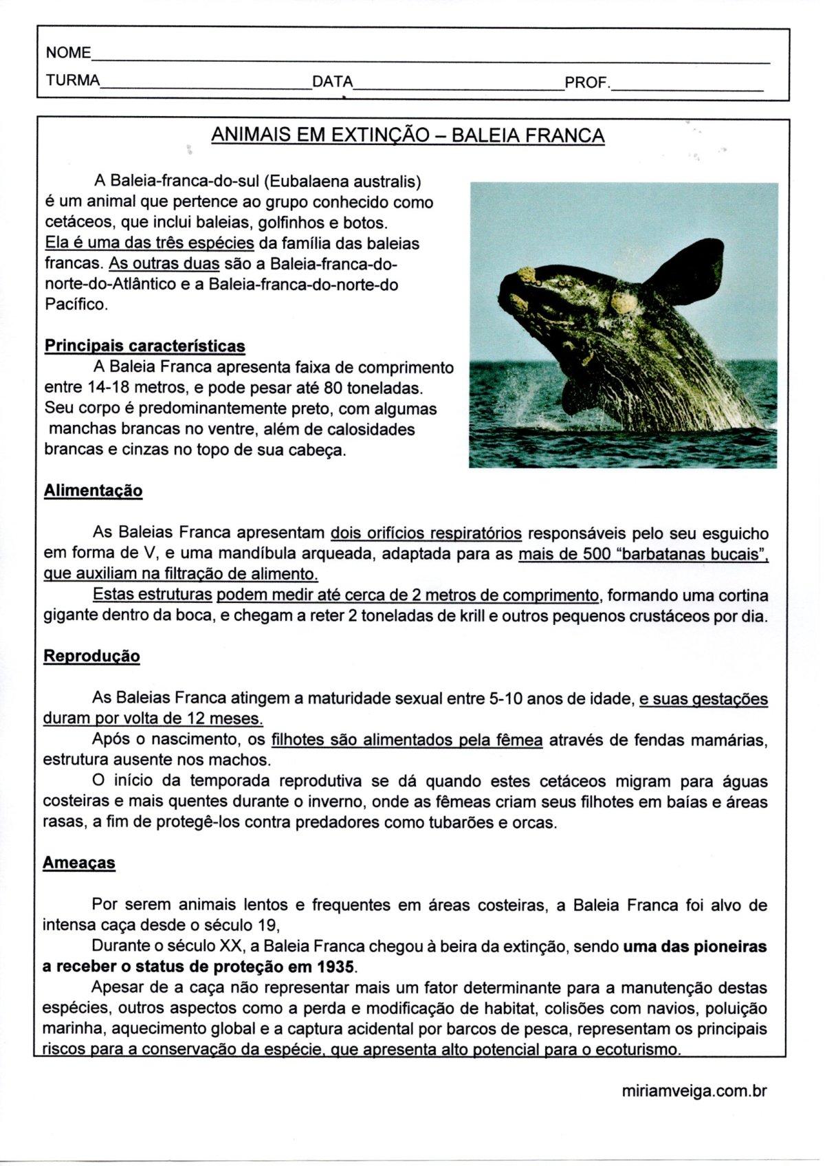 Animais em extinção-Baleia Franca-Texto