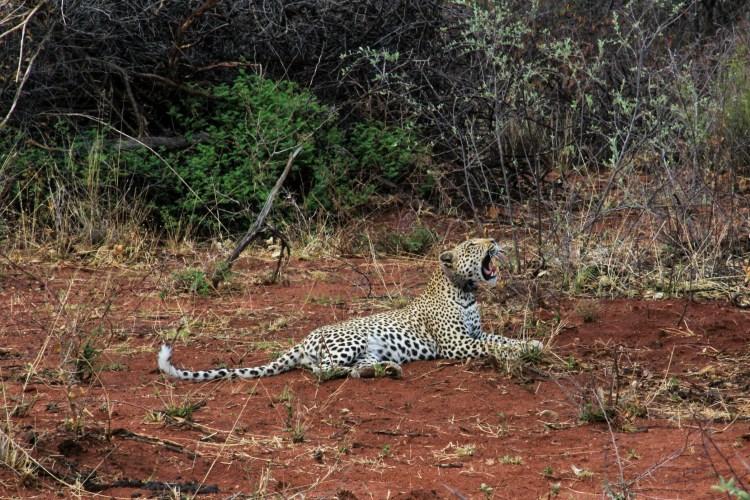 Namibia wildlife-1