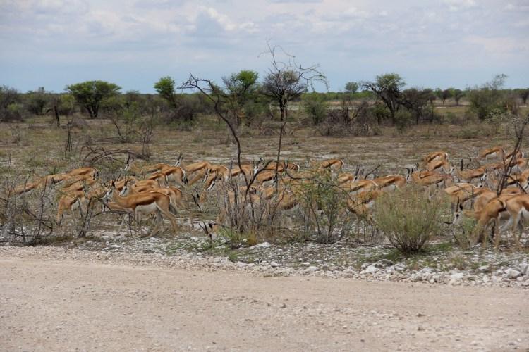 Namibia wildlife-13