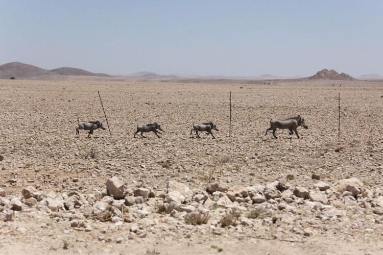 Namibia wildlife-20
