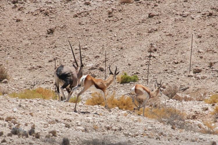 Namibia wildlife-21