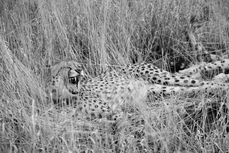 Namibia wildlife-5