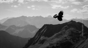 Vögel_MF-23