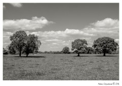 LowerWithington_003