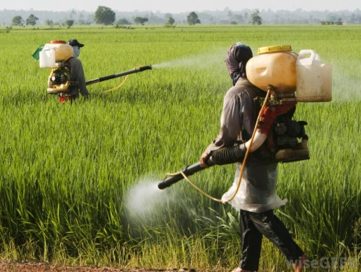 Pesticides Gone Wild - Responsible Business