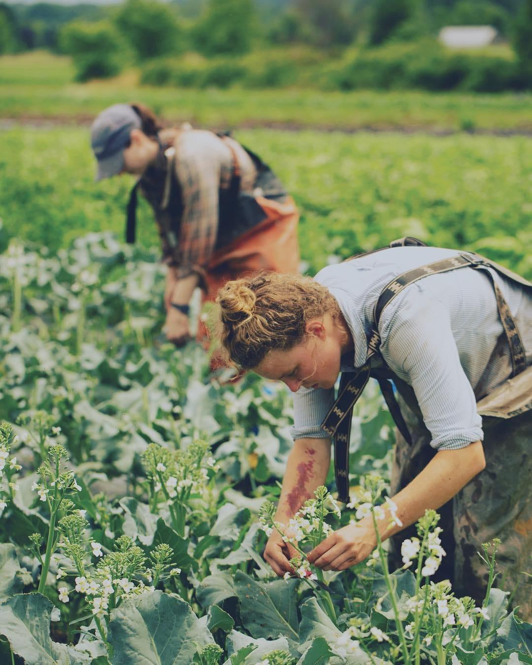 Farmer & Son Funeral Home Geneva Nebraska : farmer, funeral, geneva, nebraska, Young, Farmers, Inspiring,, Making, Living?, Heated
