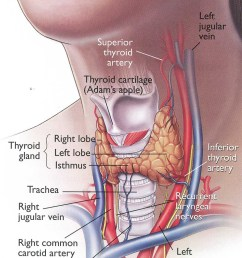 home remedies for thyroid problems [ 1000 x 1725 Pixel ]