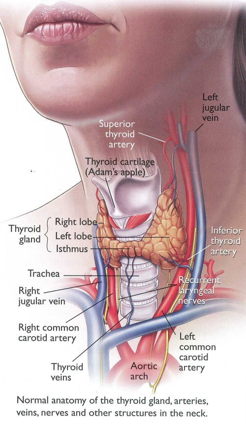 small resolution of home remedies for thyroid problems