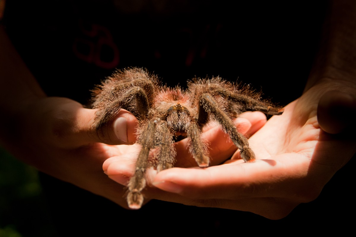 my tarantula is better