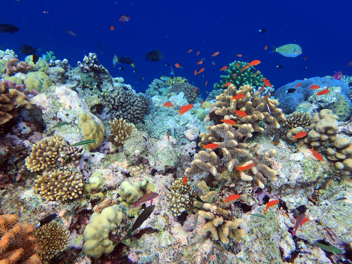 Coral Reef Finance An Essential Investment