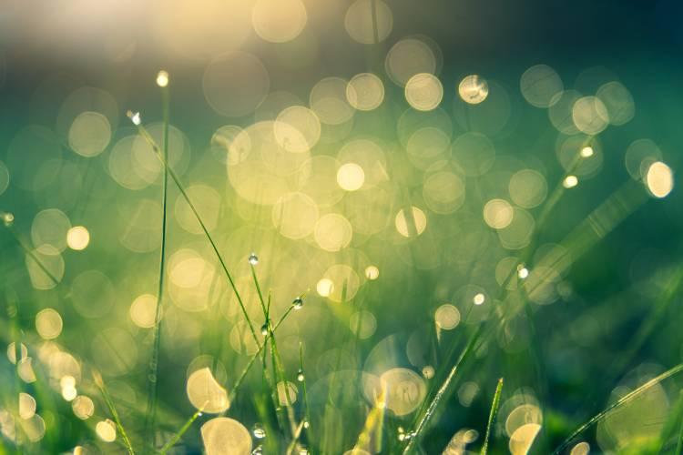 Morning Dew. Haiku   by Carter Tinsley   House of Haiku   Medium