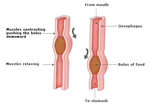 irritable bowel syndrome gut