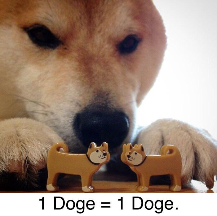 doge a meme from