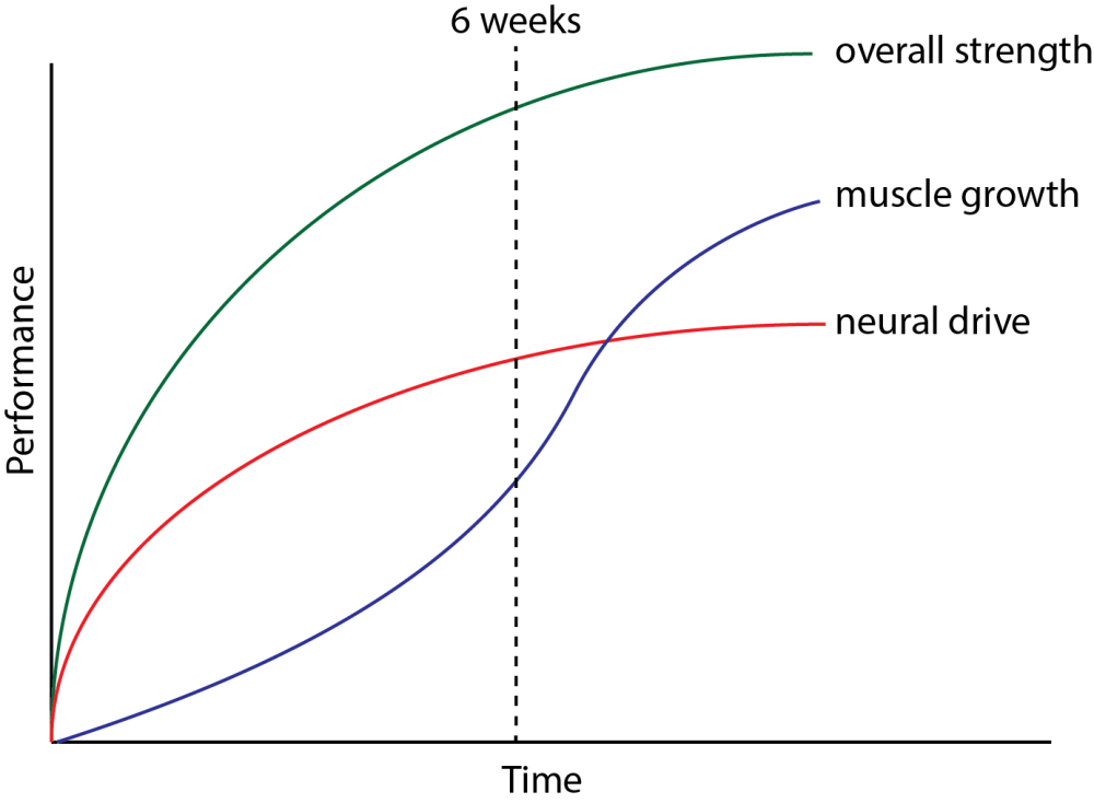 medium resolution of schematic depicting the relationship between strength development muscle growth and neural changes