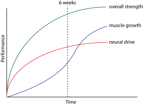 small resolution of schematic depicting the relationship between strength development muscle growth and neural changes