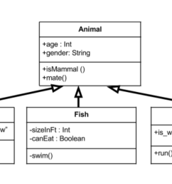 above we have an animal parent class with all public member fields you can see the arrows originating from the duck fish and zebra child classes which  [ 1400 x 678 Pixel ]