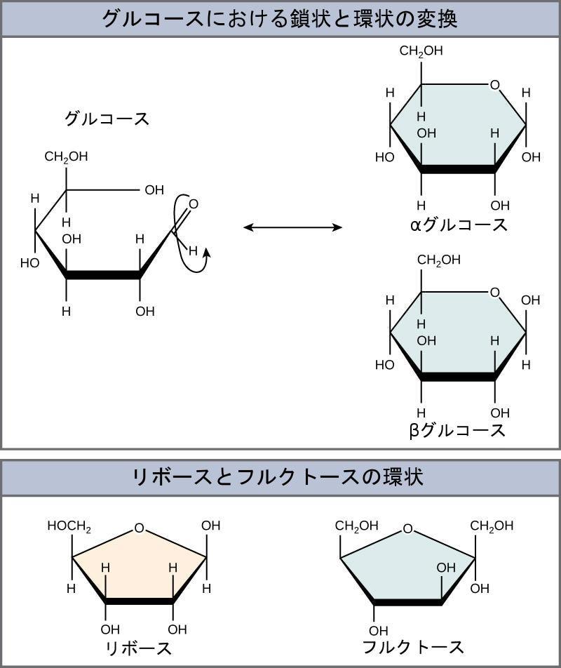 """生物學 第2版 — 第3章 生物學的高分子 —. Japanese translation of """"Biology 2e""""   by Better Late Than Never   Medium"""