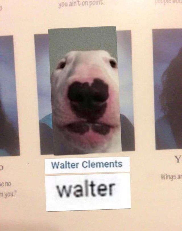 "Walter Dog Nails : walter, nails, Behind, Meme:, Nelson, ""Walter"", Owner, Brandon, Sears, Medium"