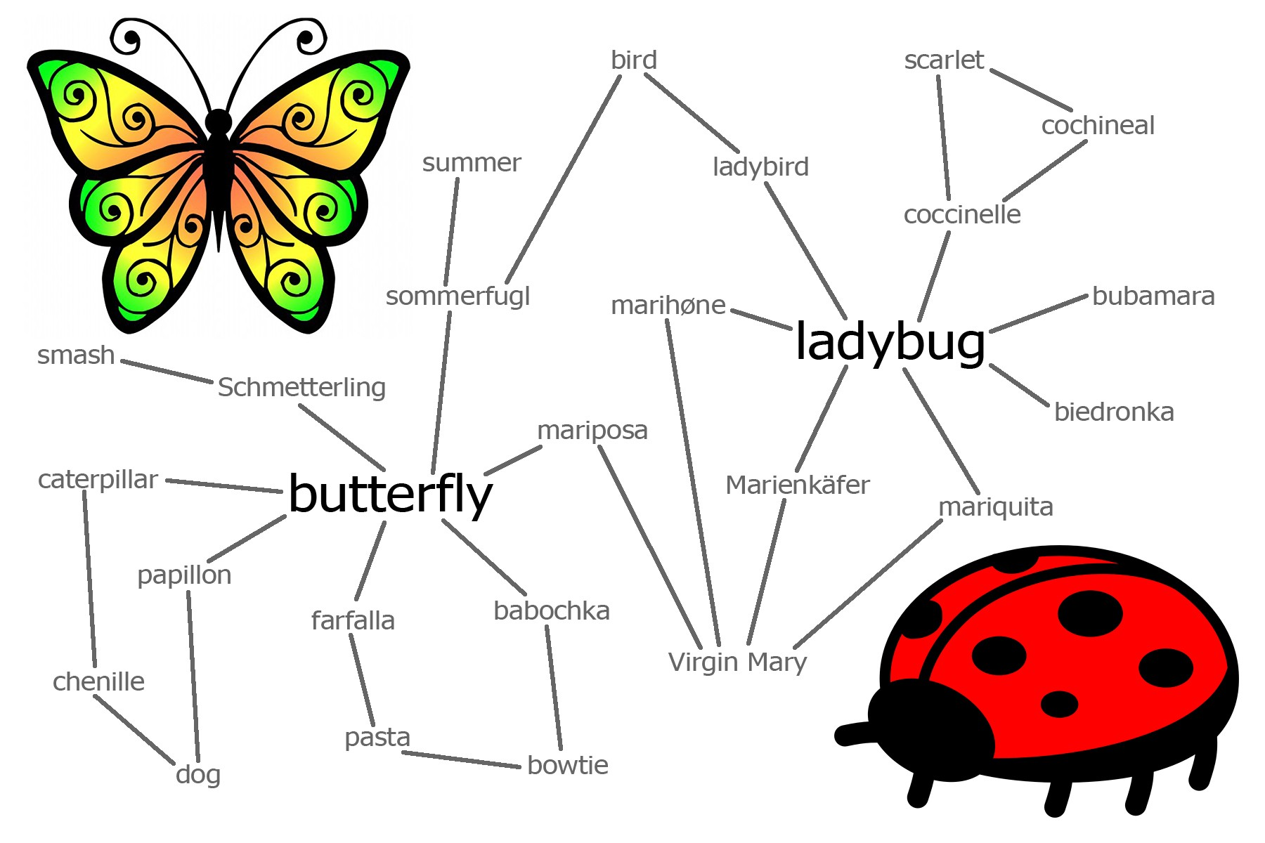 hight resolution of word connections butterfly ladybug