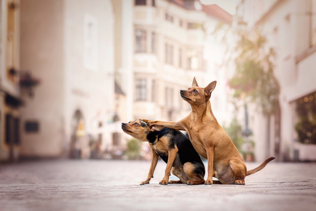 Two dogs in the middle of a street sit next to each other, and one has his paw placed on the others head, pushing down