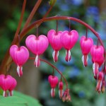 Top 10 Most Beautiful Flowers In The World By David Atkins Medium