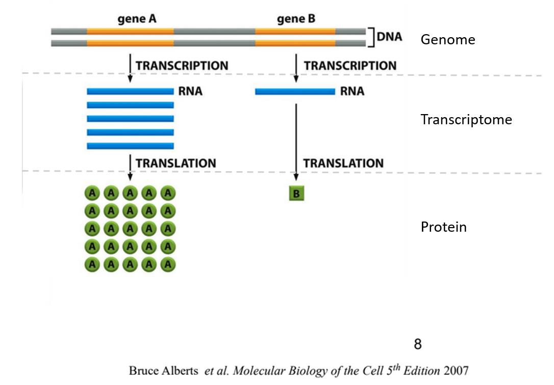RNA Quantification. RNA 定量. 簡單介紹 RNA-seq 表現量(Abundance) 的基本概念 | by linnil1 | Sep. 2020 | Medium