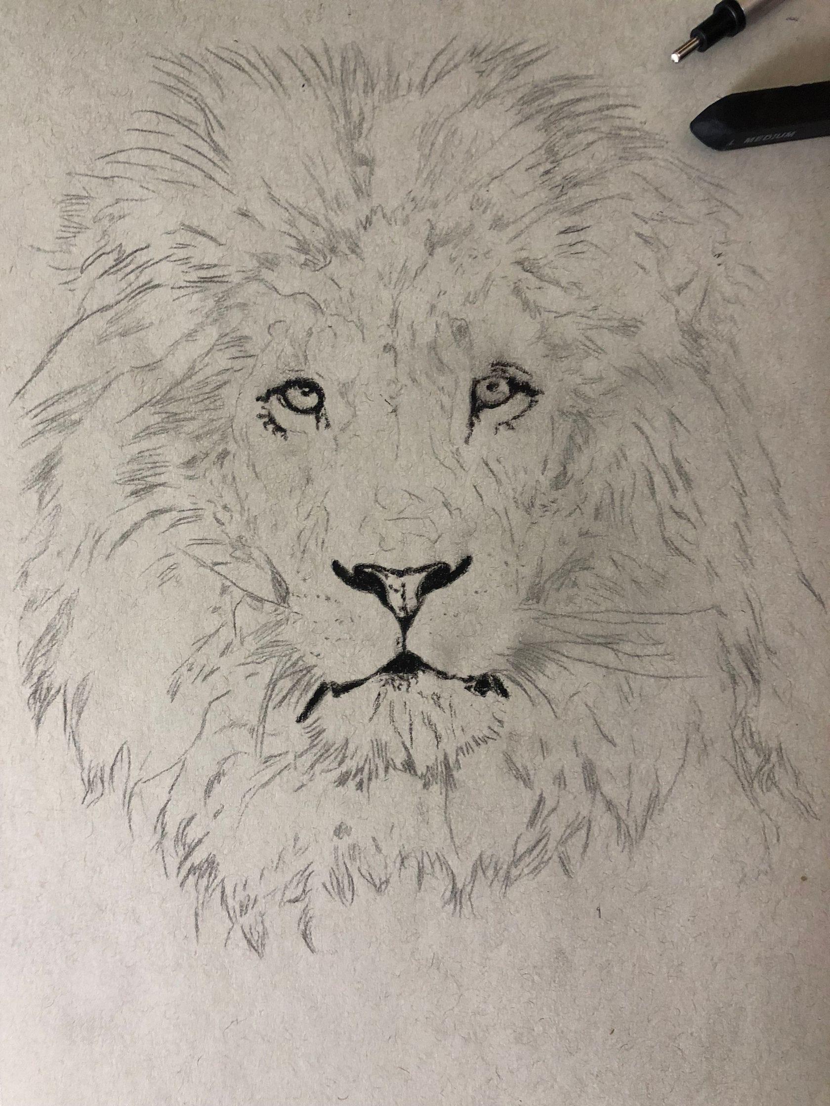 Lion Realistic Drawing : realistic, drawing, Drawing, Lion!, Realistic, Charcoal, @Simon, Medium