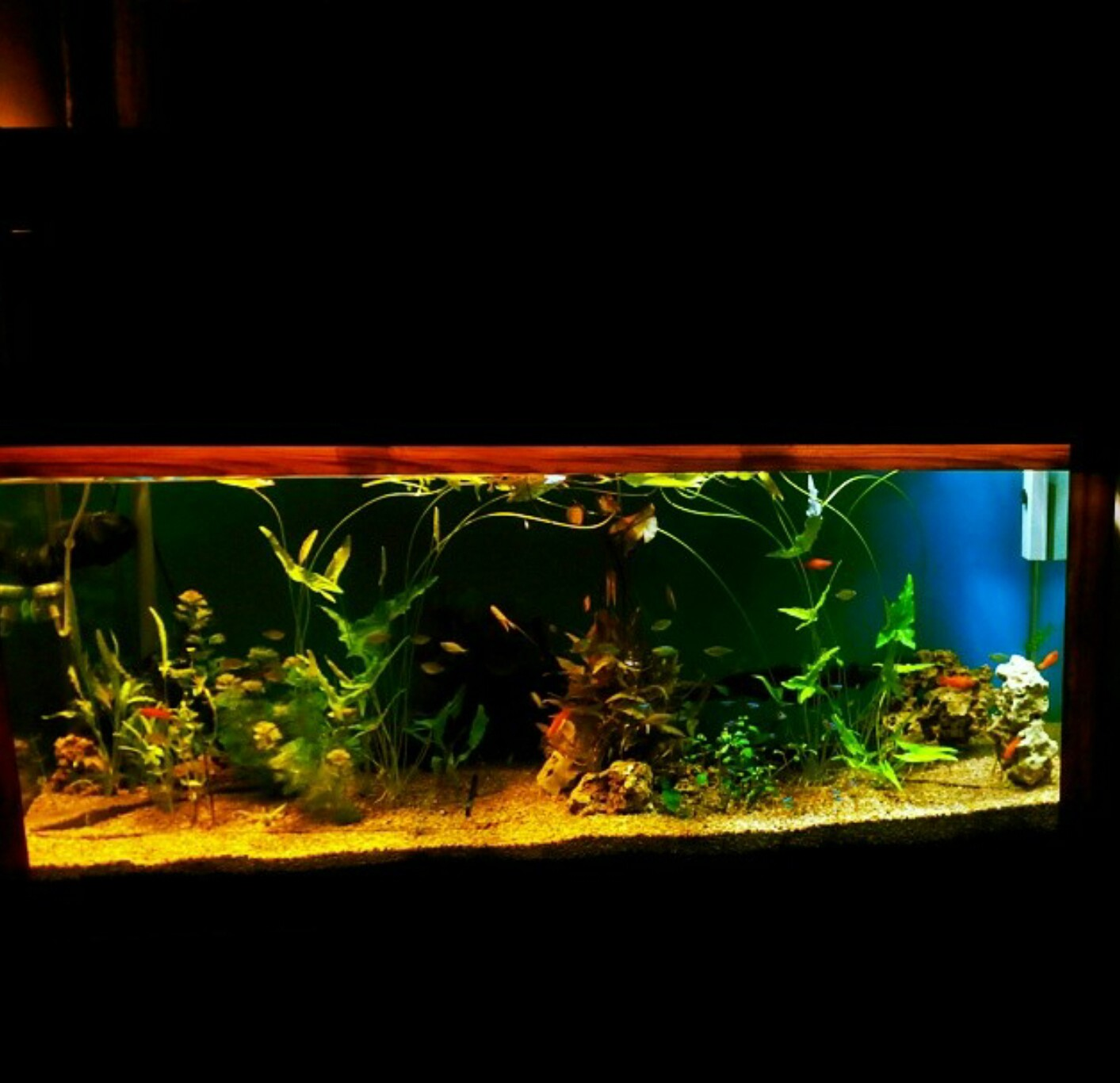 setting up a freshwater