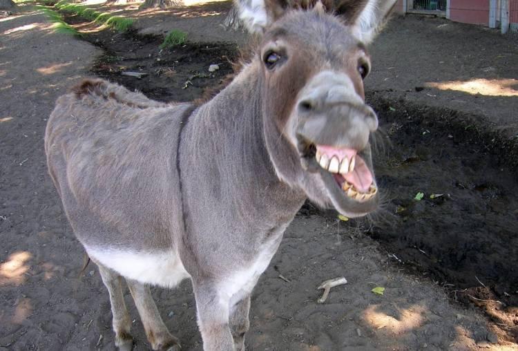 Don't be a donkey - Callum Herries - Medium